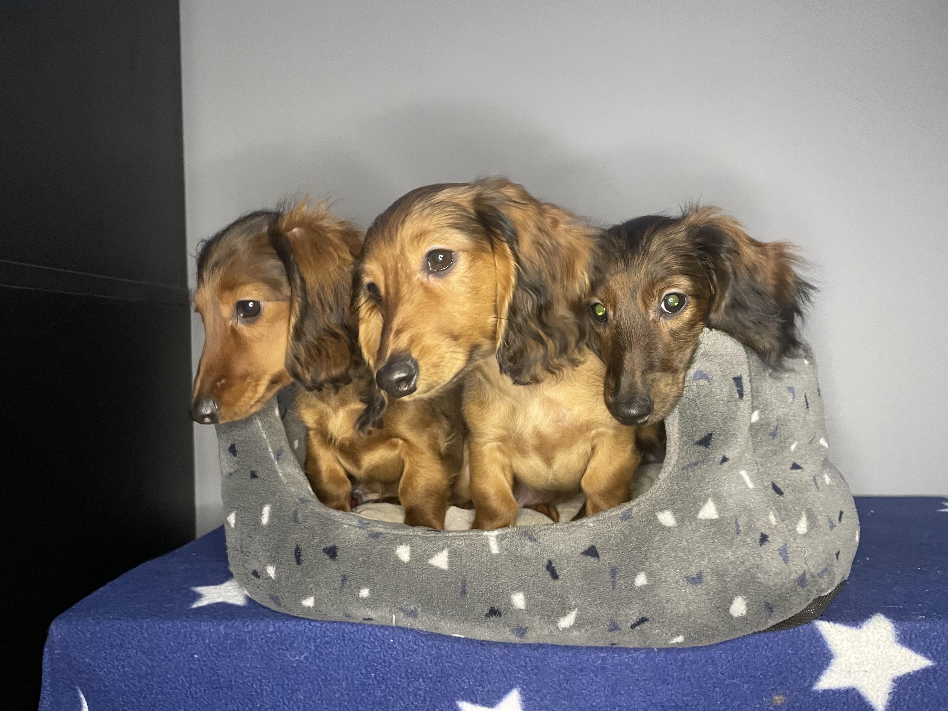 Main puppy image