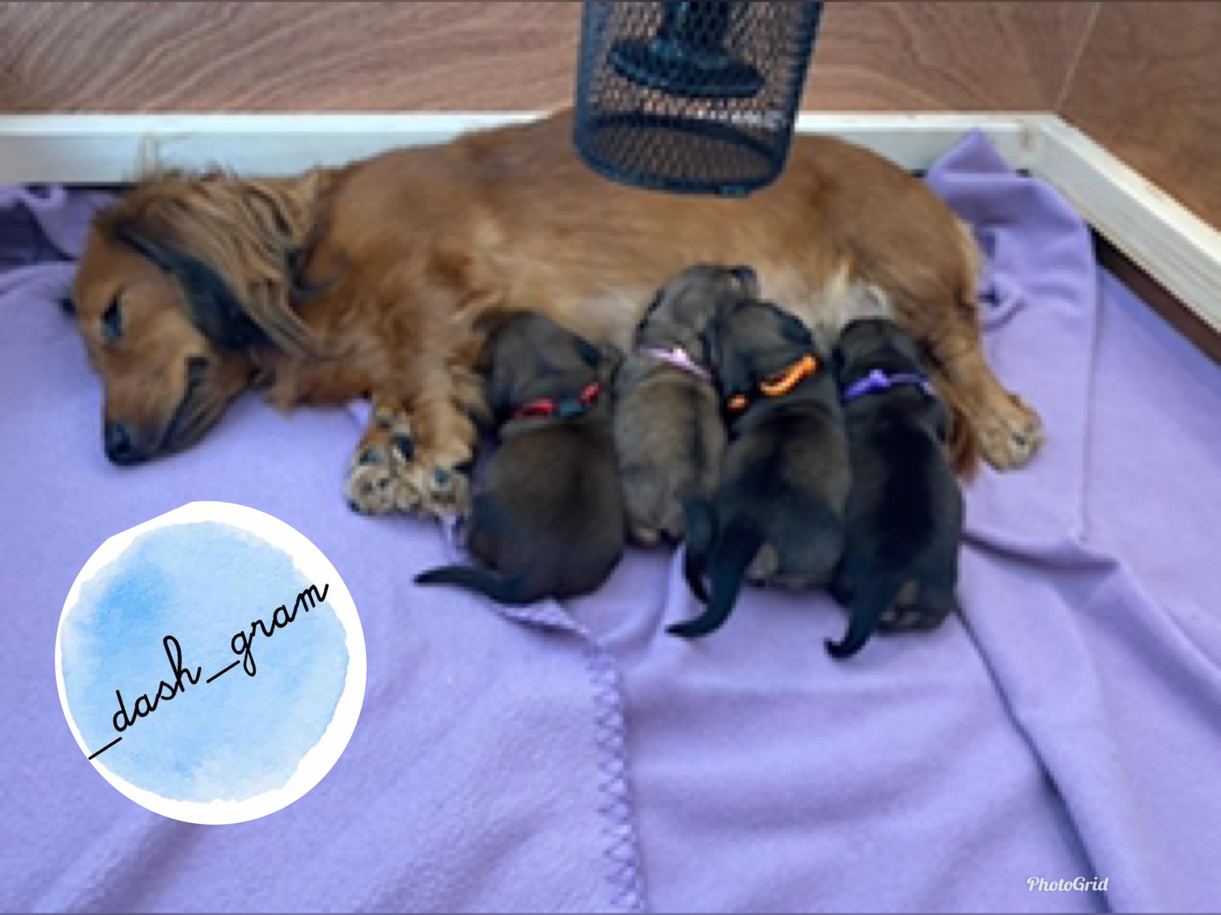Mum & Pups.